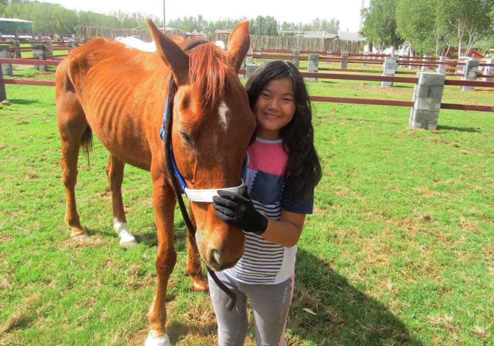 csr-horse